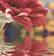 Brazil Deco Flowers 6 Панно из 3 плиток
