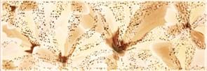 ALEXA Бордюр желтый YL 9,6х27,5