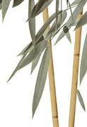 Бамбук ВС7БМ004 Декор 24,9х36,4