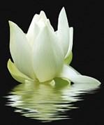 City White Lilies Панно 60x50 (3пл)