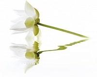 City White Lilies Панно 40x50 (2пл)