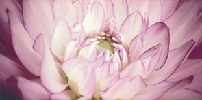 Плитка Sorenta mocca durst kwiaty В Декор 30x60